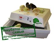 Самый лучший инкубатор для яиц - Лелека